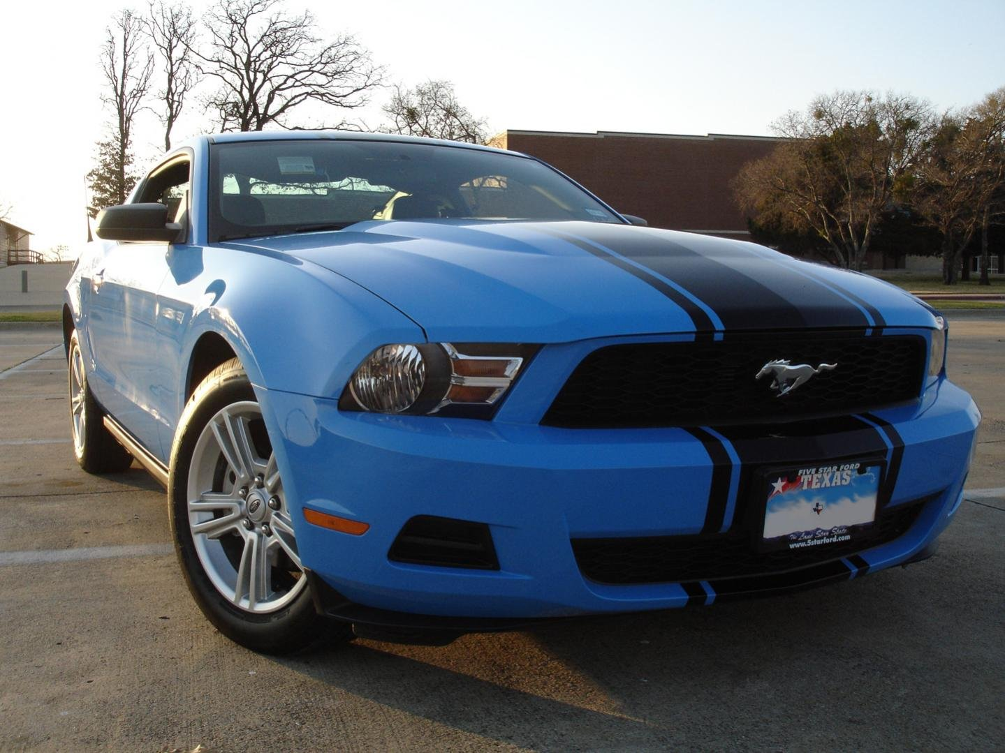 Had Supersnake Stripe Painted On My 2010 Thoughts