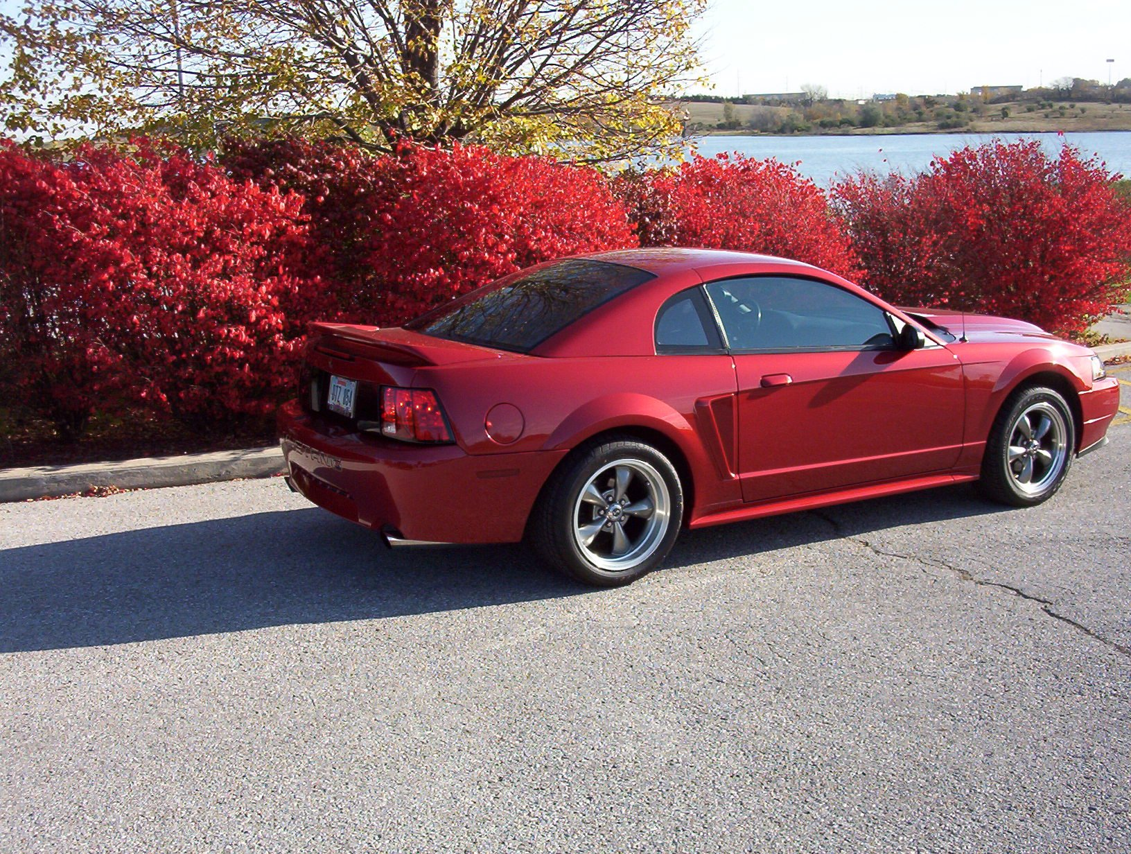 Click image for larger version name fall mustang 003 jpg views 13254