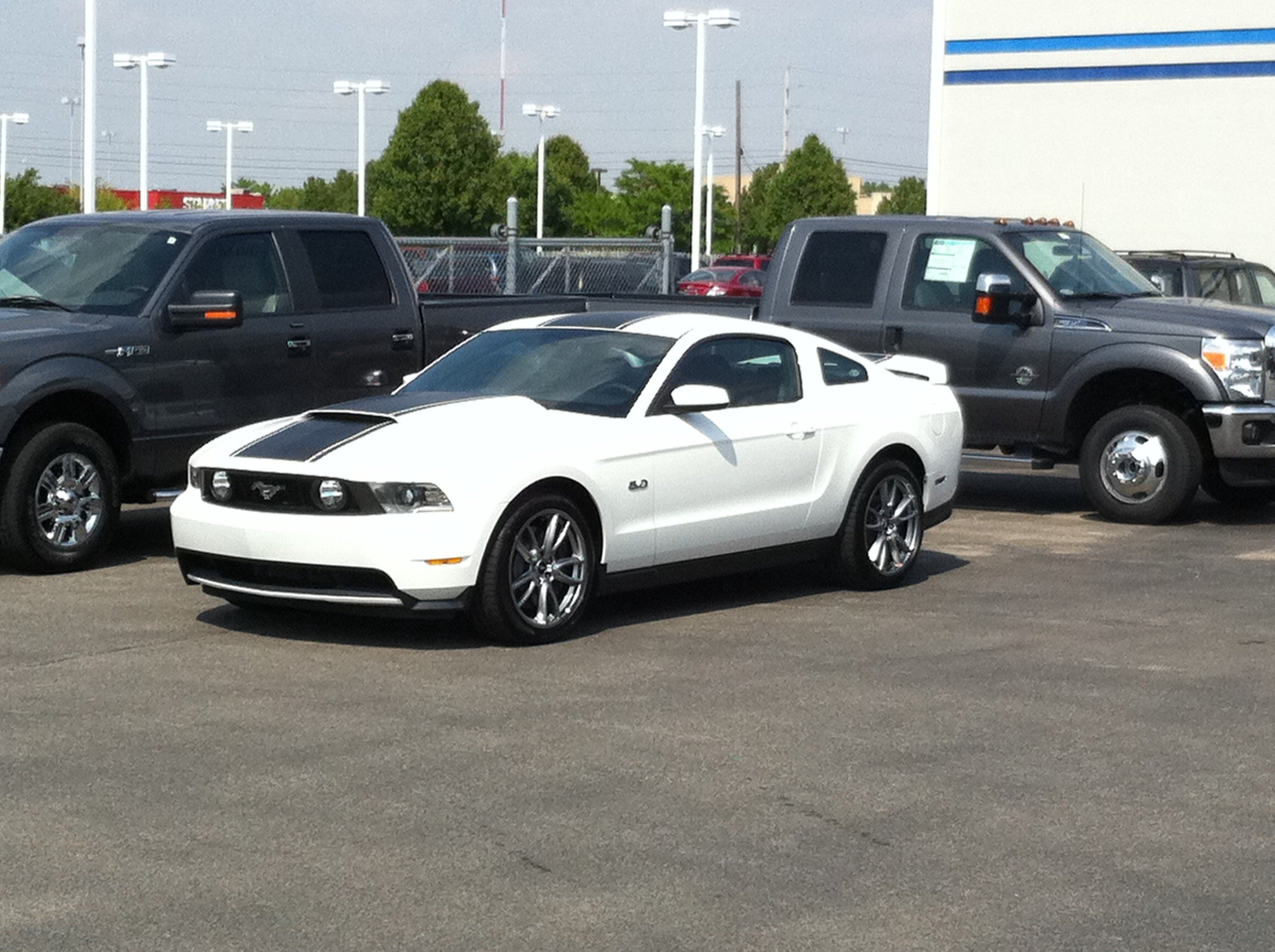 custom striping thoughts the mustang source ford mustang forums - Mustang 2012 White