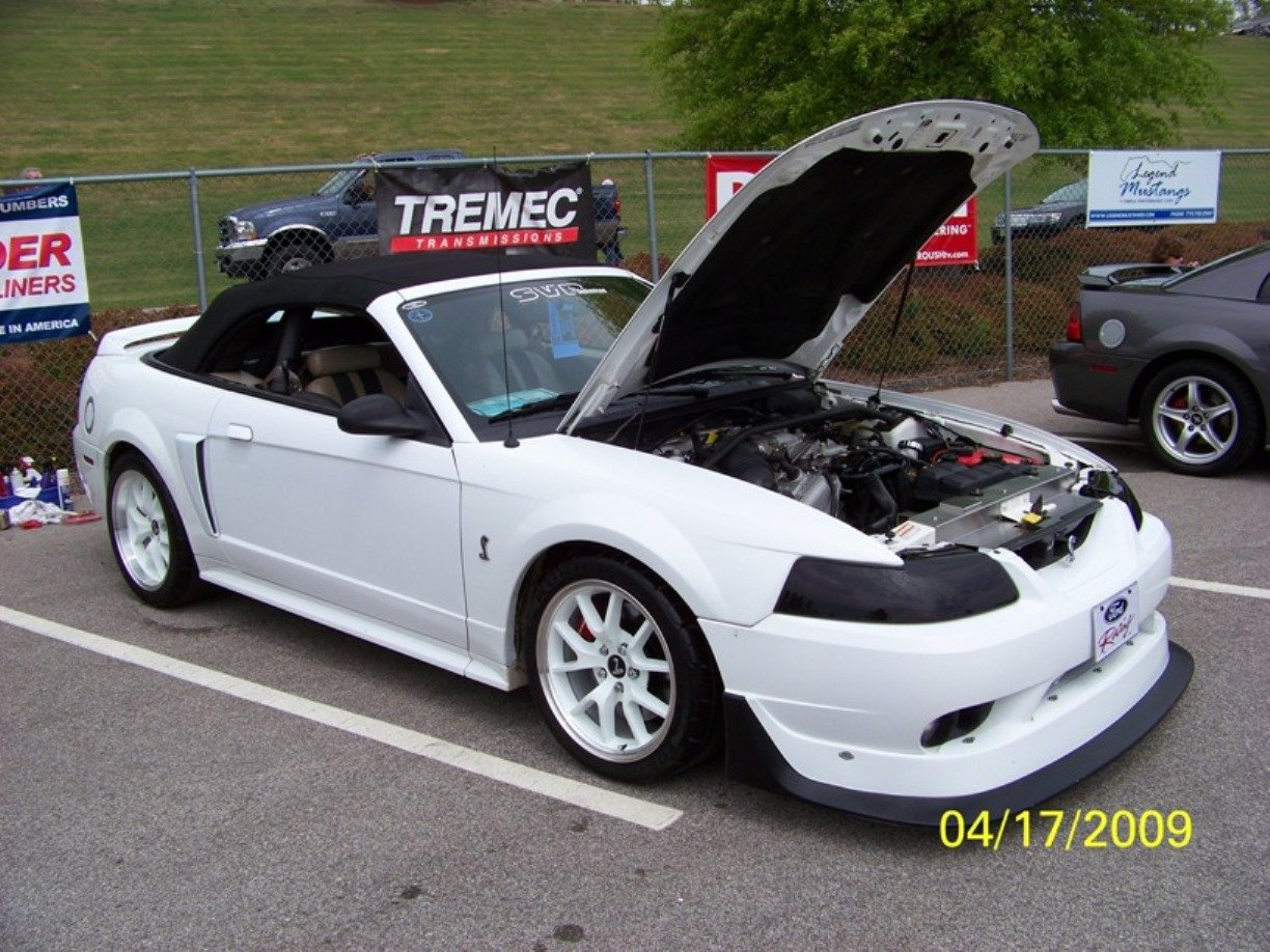 Click image for larger version name mustang 003 jpg views 21285 size
