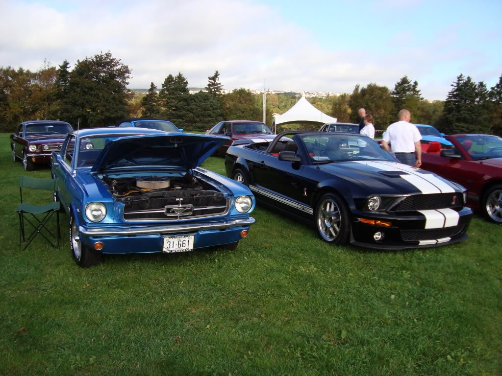 Mustangs in the Park: All Ford Mustangs Car Show in St. John's, Newfoundland-seahorse-3d1be5b2.jpg