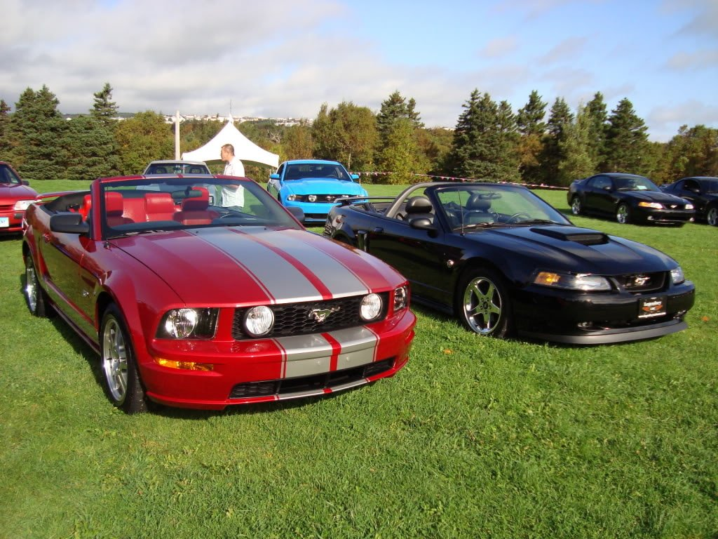 Mustangs in the Park: All Ford Mustangs Car Show in St. John's, Newfoundland-seahorse-6595e194.jpg