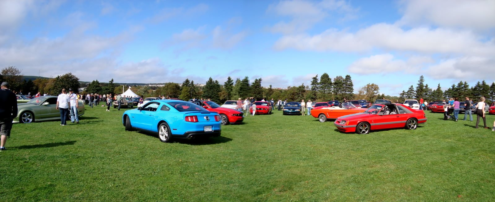 Mustangs in the Park: All Ford Mustangs Car Show in St. John's, Newfoundland-seahorse-961936f9.jpg