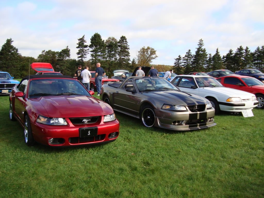 Mustangs in the Park: All Ford Mustangs Car Show in St. John's, Newfoundland-seahorse-e959eb53.jpg