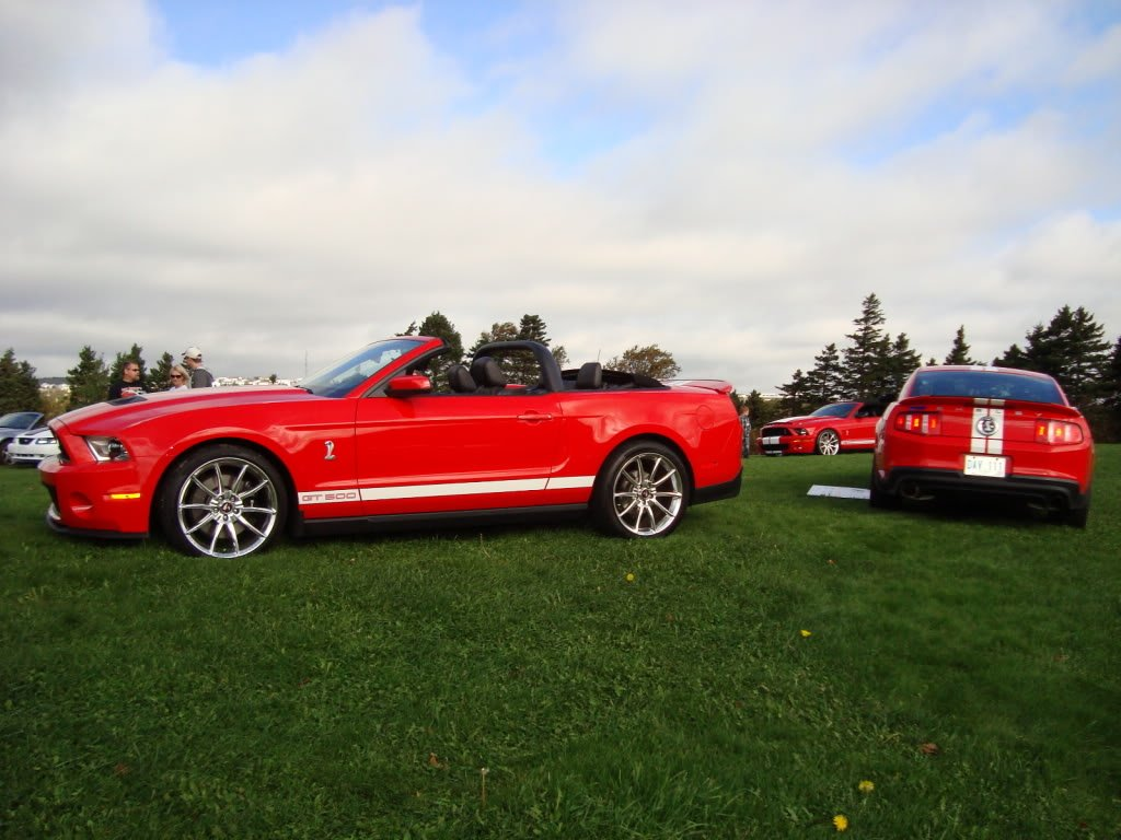 mustangs in the park: all ford mustangs car show in st. john's