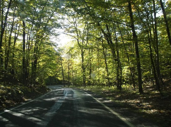 tunnel-of-trees-m119