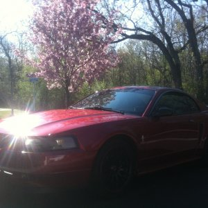 03 v6 mustang automatic