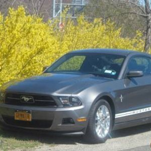 2012 Mustang-Sunrise Hwy with Azalias in background.jpg