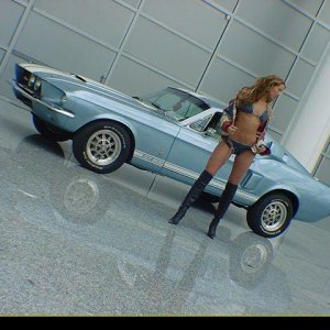 Hot Mustang Babe With Shelby GT500
